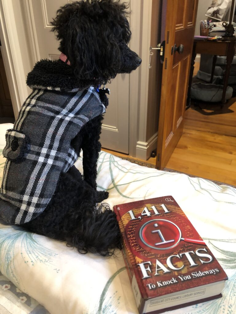 My black poodle Rosie in a jacket, with the book 1,411 QI Facts to Knock You Sideways