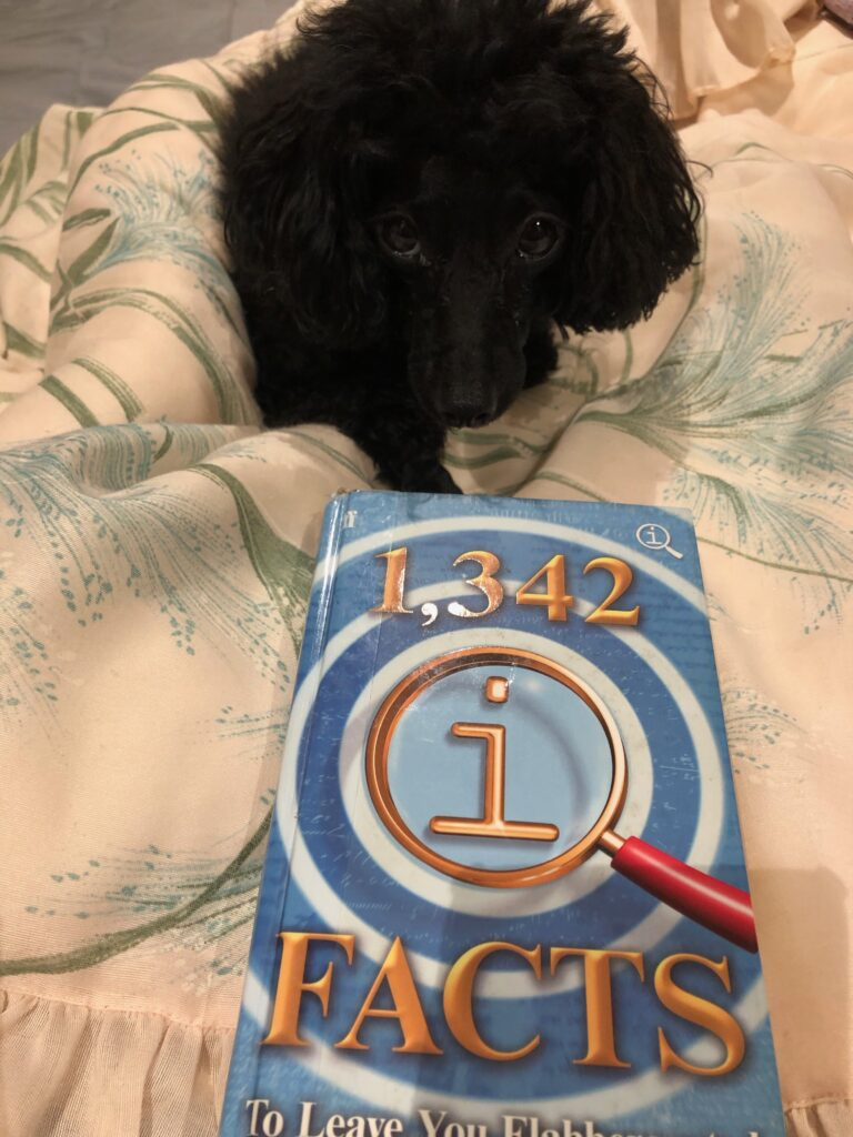 Picture of my dog Rosie with the book 1,342 QI Facts