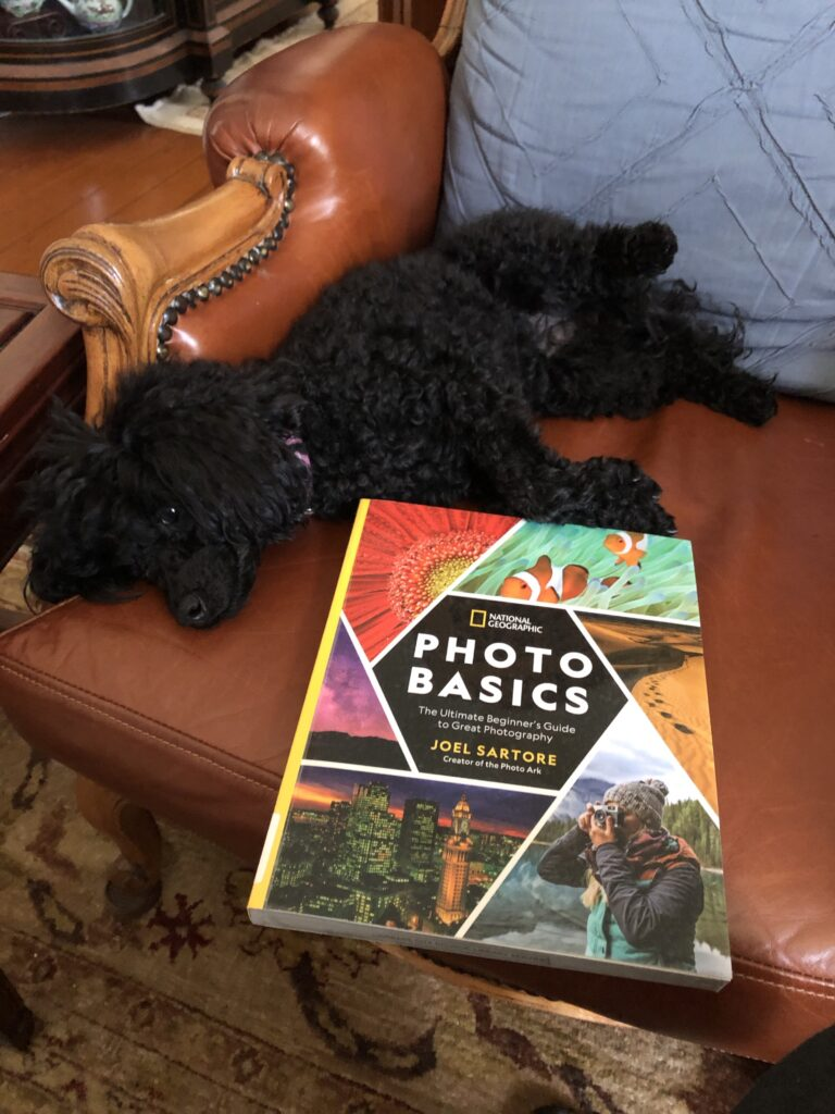 "My black poodle Rosie, lying down next to a book called ""Photo Basics"" by Joel Sartore"