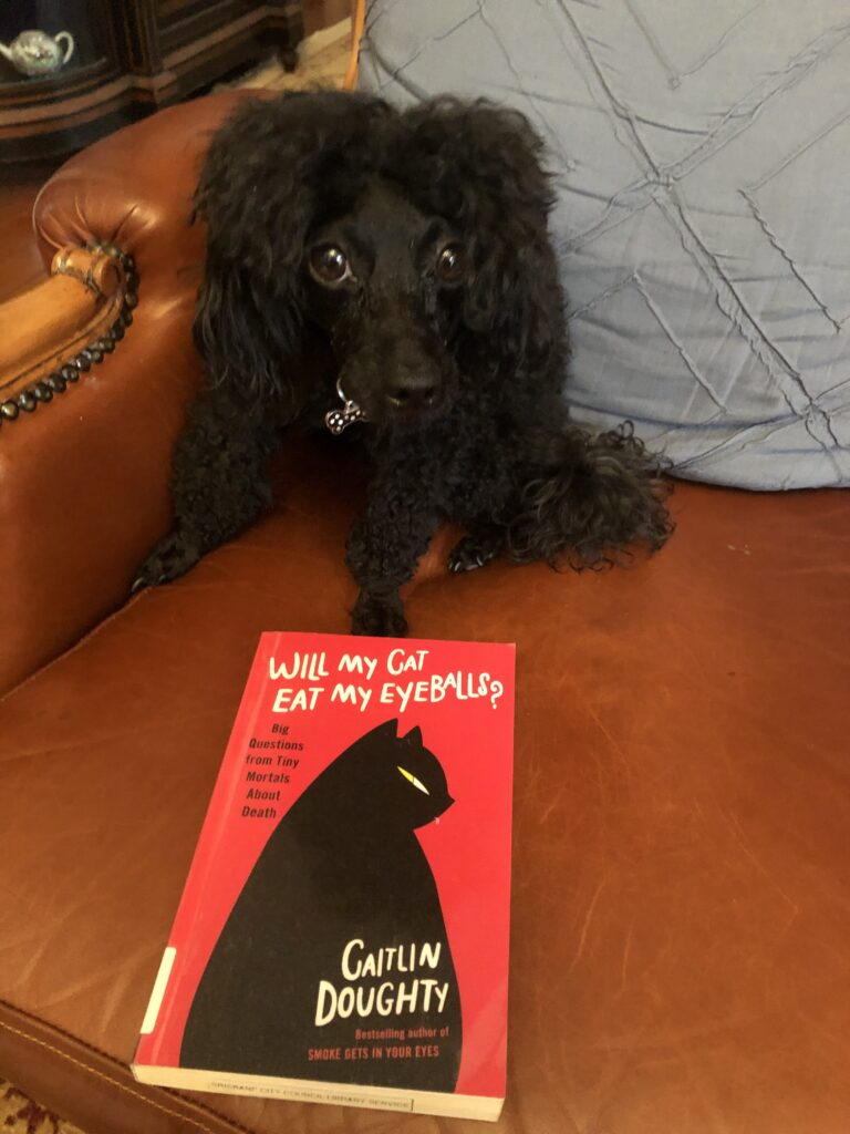 "A picture of my black poodle Rosie sitting on a leather couch with the book ""Will My Cat Eat My Eyeballs?"" by Caitlin Doughty"